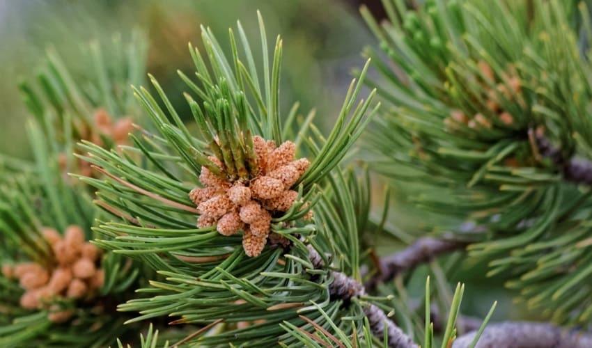 адаптация растений, что такое адаптация растений, адаптация растений это, как адаптируются растения, как адаптируются растения к неблагоприятным внешним условиям