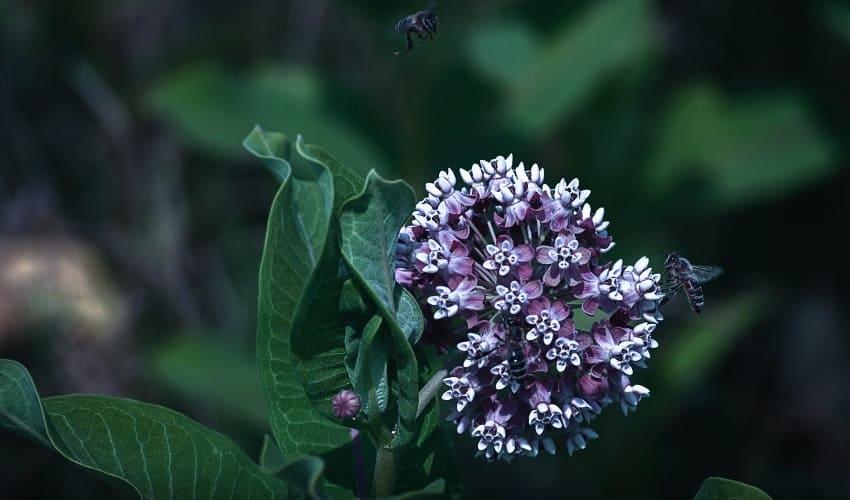 ароматные цветы, примеры ароматных цветов, ароматные цветы в саду