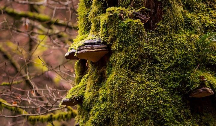 пять царств живой природы, царство растений, царство животных, царство грибов, царство одноклеточных простейших организмов, царство бактерий