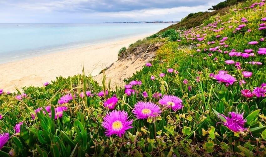 цветковые растения, цветковые растения это, что такое цветковые растения, покрытосеменные растения