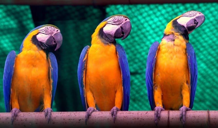 домашние птицы, как разводят домашних птиц