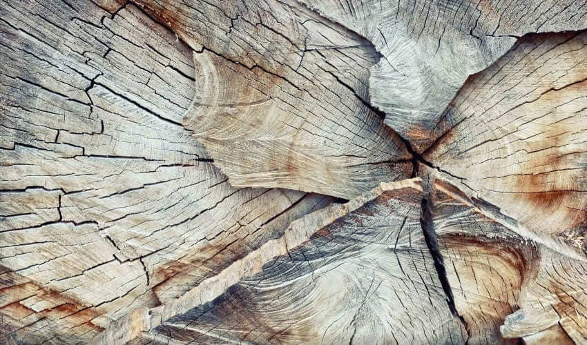 мягкая и твердая древесина, мягкая древесина, твердая древесина, древесина