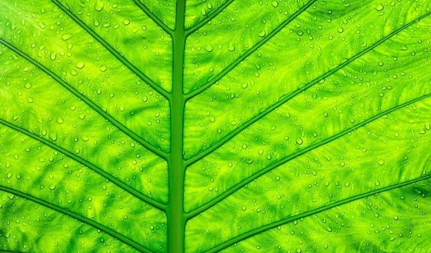 фотосинтез, что такое фотосинтез, фотосинтез это, процесс фотосинтеза