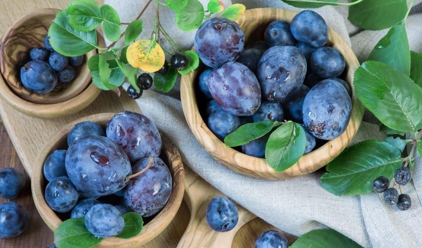 фрукты настоящие, фрукты ложные, фрукты настоящие и ложные, ложные фрукты, настоящие фрукты