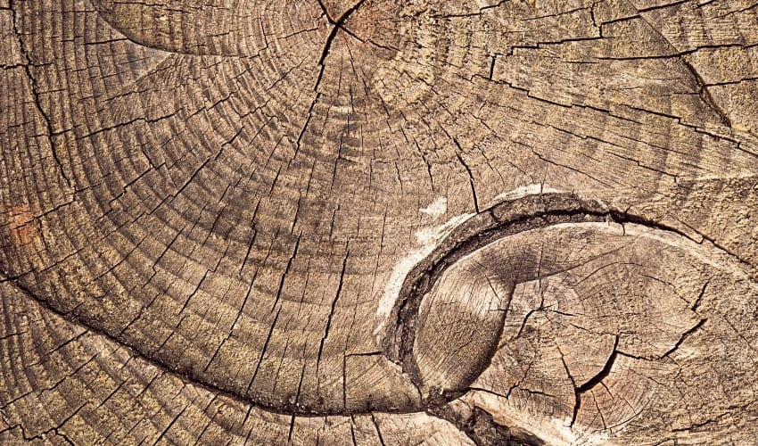 годичные кольца, годичные кольца это, что такое годичные кольца, годичные кольца деревьев