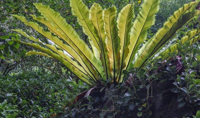исчезновение растений, почему исчезают растения, исчезнувшие виды растений