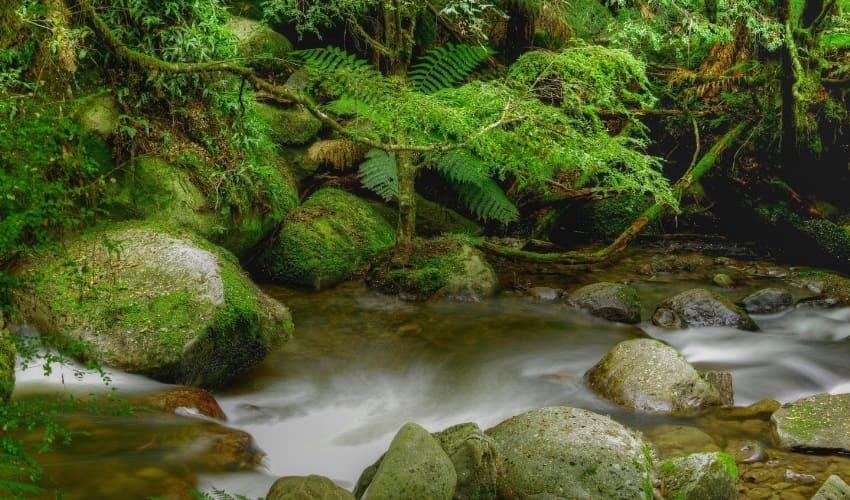 исчезновение тропических лесов, вырубка тропических лесов, уничтожение тропических лесов