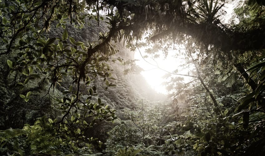 лесные богатства амазонии, леса амазонии