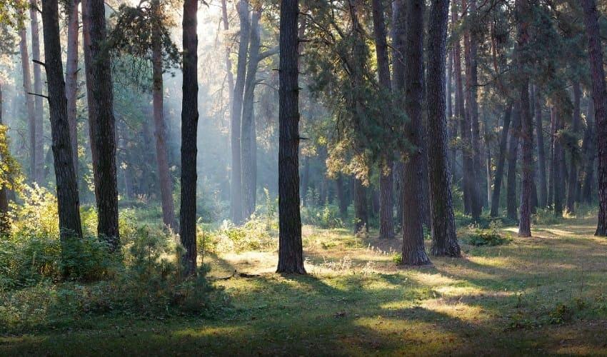 леса, тропические леса, хвойные леса, исчезновение лесов, вырубка леса, лес