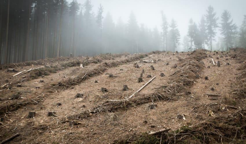 почему лесов становится меньше, причина гибели лесов, уничтожение лесов