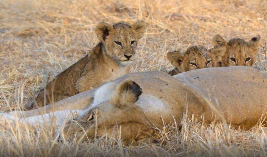 млекопитающие, млекопитающие это, кто такие млекопитающие, признаки млекопитающих
