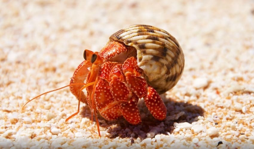 моллюски, моллюски это, каких животных относят к моллюскам, кто такие моллюски