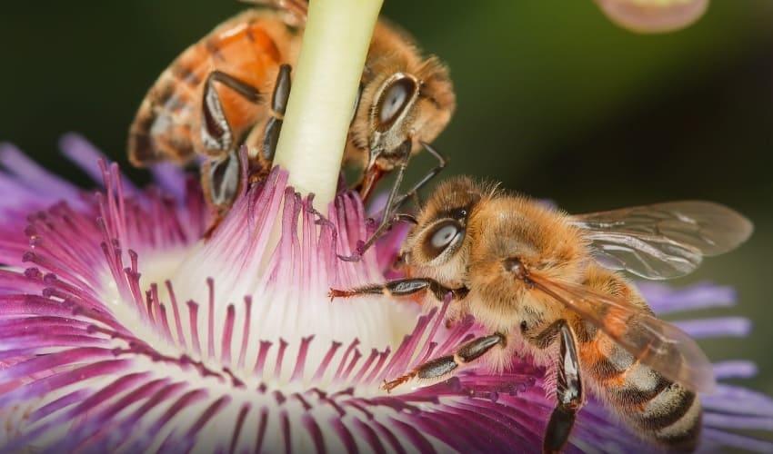 какую пользу приносят насекомые, польза от насекомых, роль насекомых, роль насекомых в природе