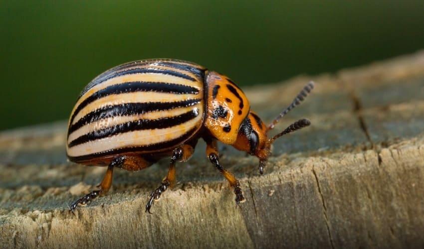 насекомые враги, какие насекомые враги, какие насекомые являются врагами, вредные насекомые