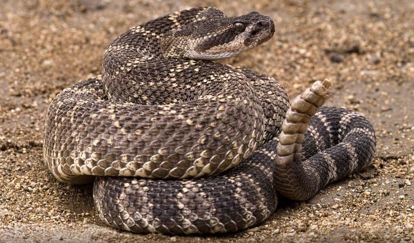 опасные змеи, какие змеи опасны, змеи опасные для человека
