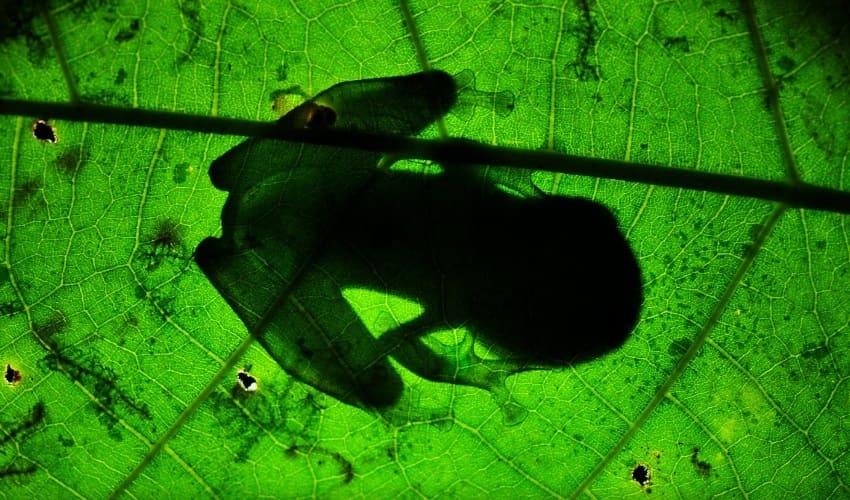 отряды земноводных, какие бывают отряды земноводных, разновидности земноводных