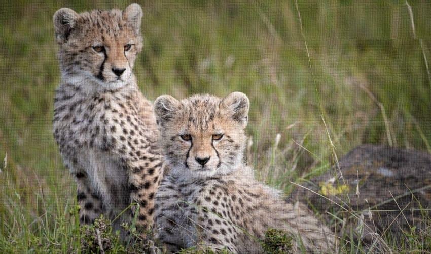 охрана природы, охрана природы в мировом масштабе, всемирная охрана природы