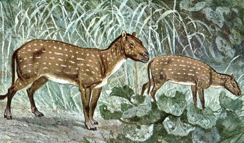 происхождение лошади, от кого произошли лошади, гиракотерис