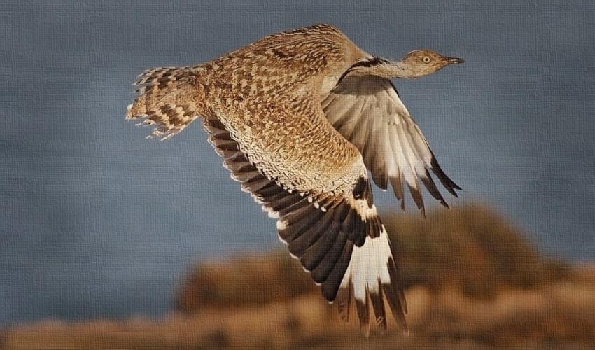 птицы рекордсмены, какие птицы летают выше всех, какие птицы летают быстрее всех, какие птицы весят больше других, самые многочисленные домашние птицы
