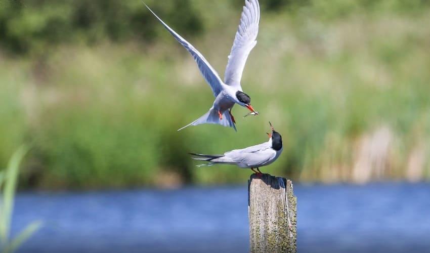 птицы, птицы произошли, самая древняя из известных птиц