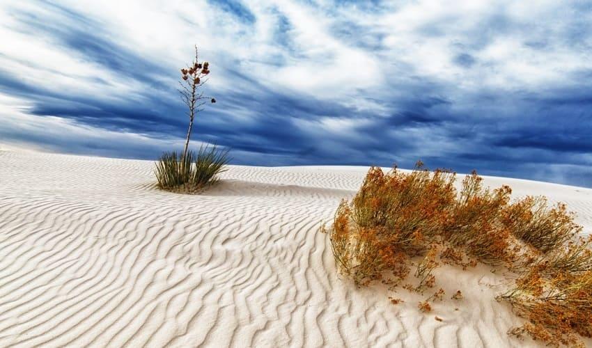 растения пустыни, какие бывают растения пустыни, какие растения растут в пустыни