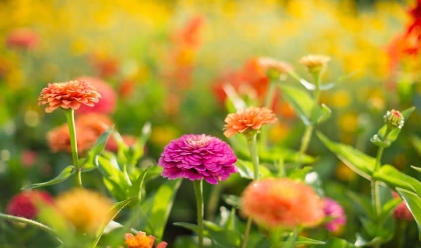 растения, что такое растения, растения это, растения характеризуются