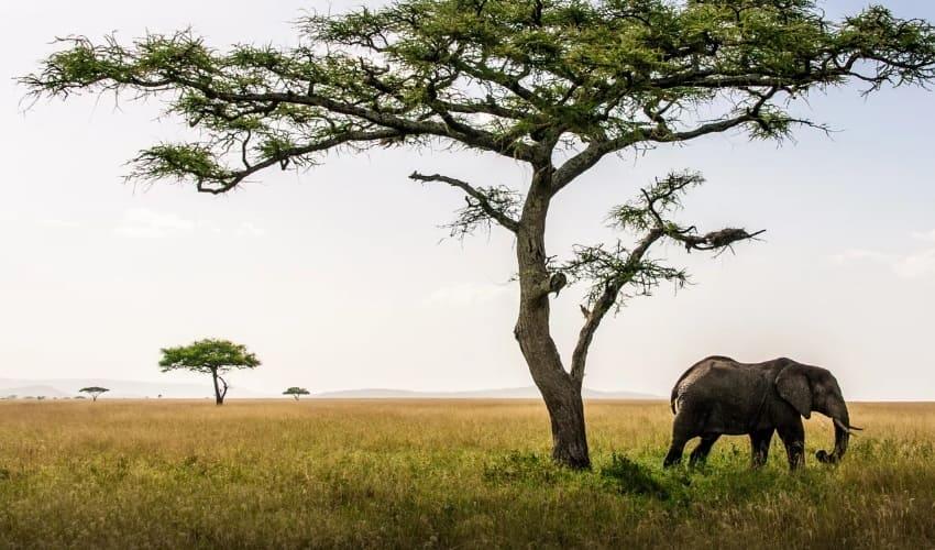 африканские саванны, саванны, саванны африки