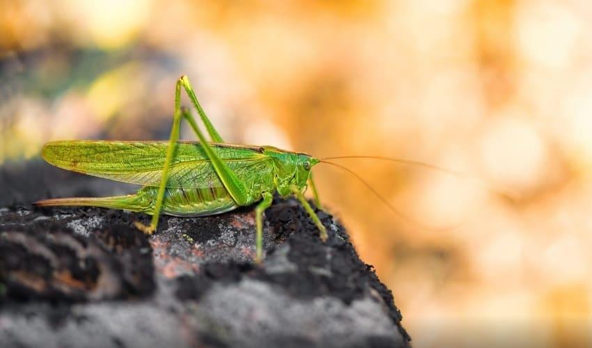 съедобные насекомые, каких насекомых едят, каких насекомых употребляют в пищу