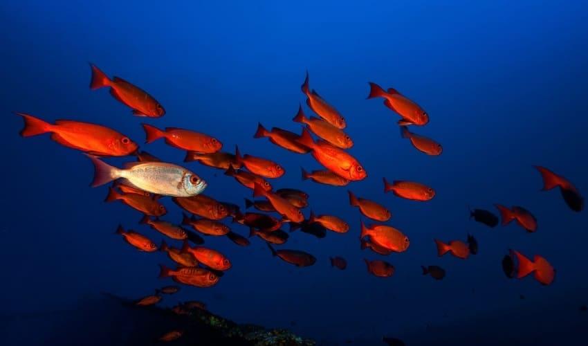 сокровища глубин мирового океана, сокровища глубин, полезные ископаемые мирового океана