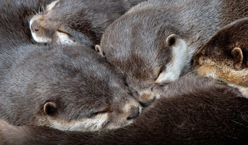зимняя спячка, называется зимней спячкой, летняя спячка, спячка, впадать в спячку