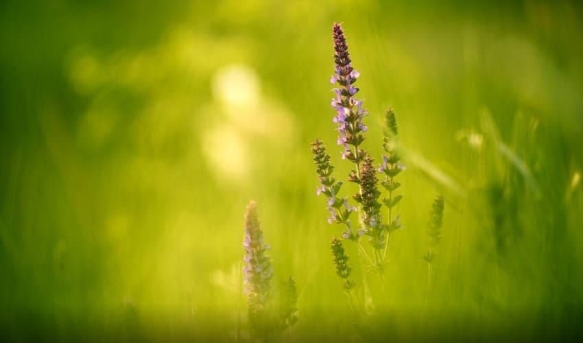 травянистые растения, травянистые растения это, что такое травянистые растения