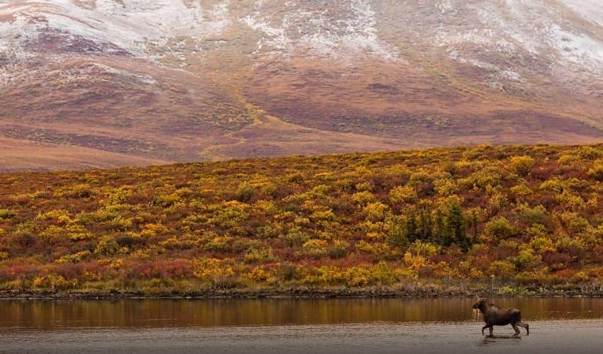 тундра, растительность тундры, название тундры, растительный покров тундры