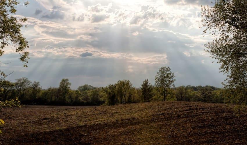 какие бывают почвы, плодородные почвы, чернозем, краснозем