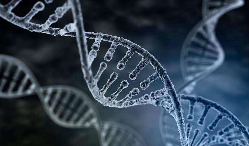 хромосома человека, хромосома человека, что такое хромосома человека, хромосома, хромосома это, хромосомы