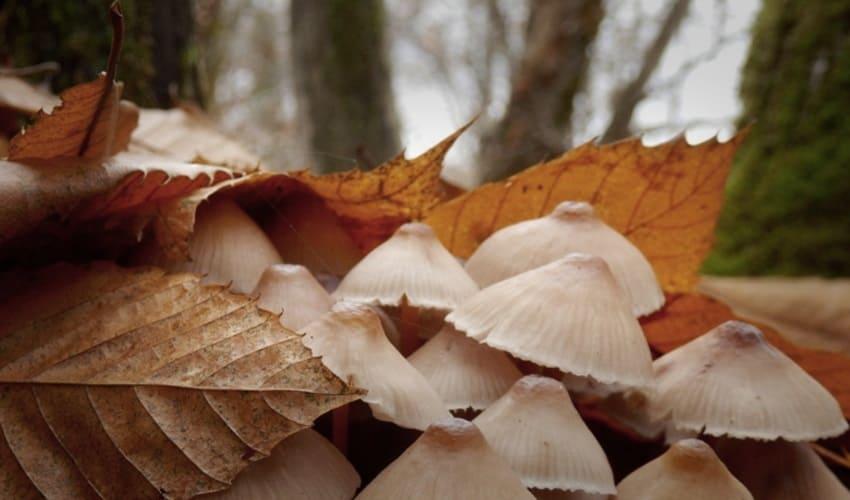 ядовитые грибы, какие грибы являются ядовитыми