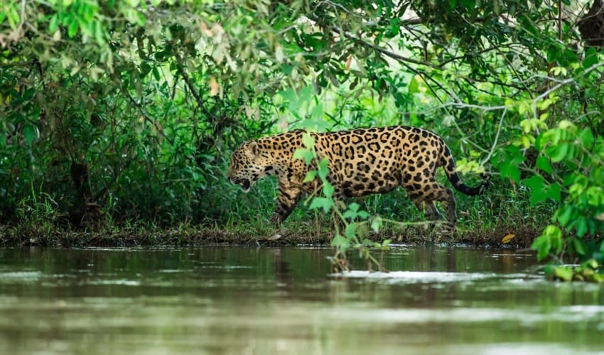 животный мир амазонии, животные амазонии