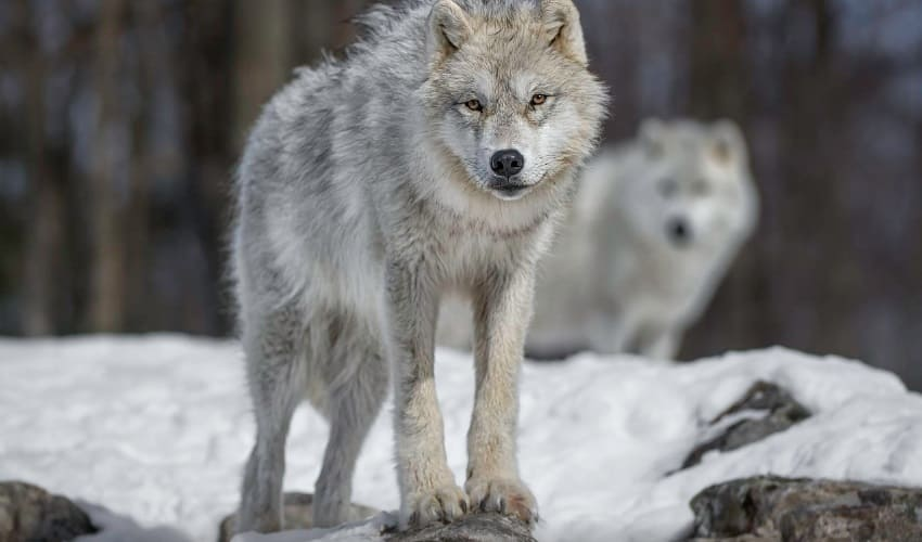 животные арктики, обитатели арктики, хозяева арктики