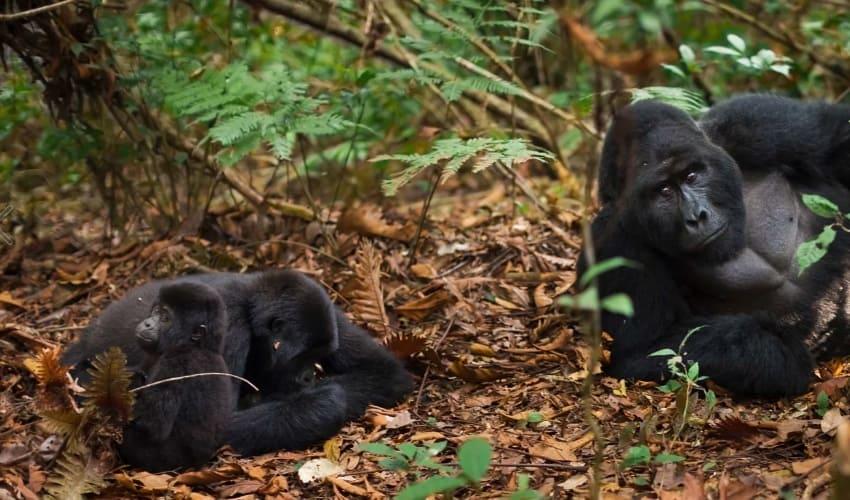 животные экваториальных лесов африки, животные экваториальных лесов, животный мир экваториальных лесов