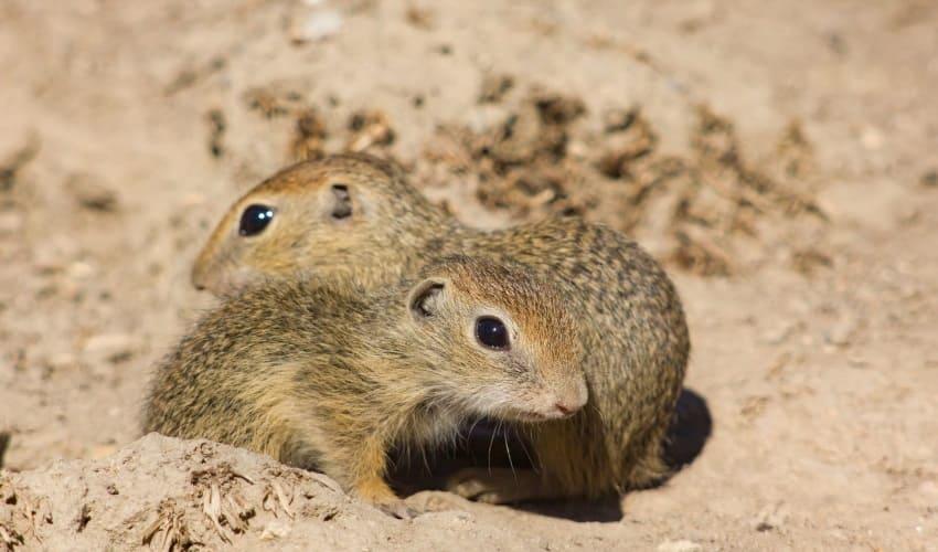 как животным укрыться на равнине, как прячутся животные степи, животные степи, животные равнин, животные лесостепи