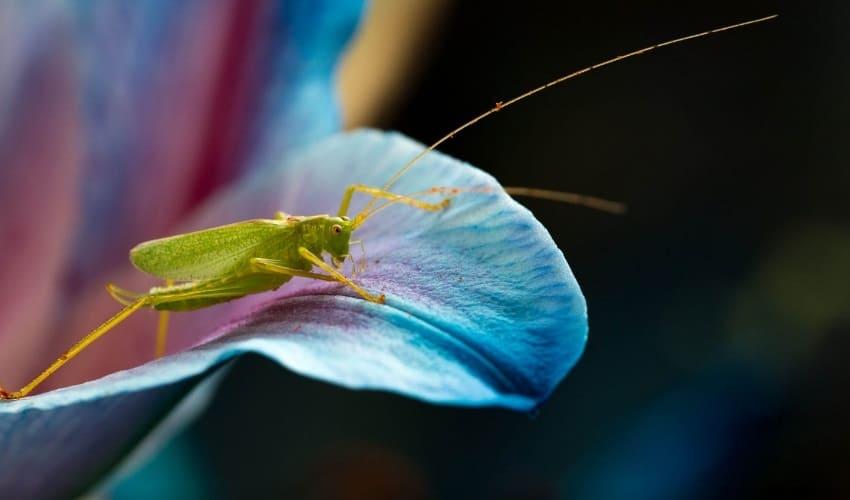 жизненный цикл насекомых, молодые насекомые