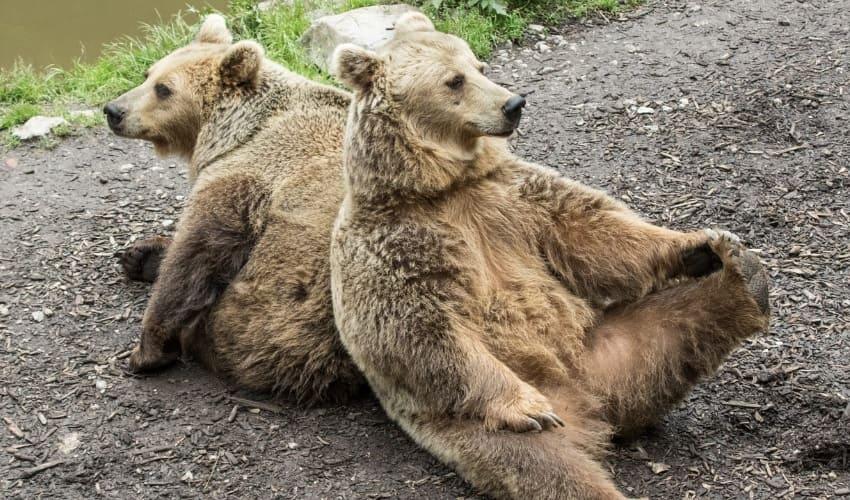 зоопарки, посещение зоопарка, какие животные живут в зоопарках, размножение животных в зоопарке