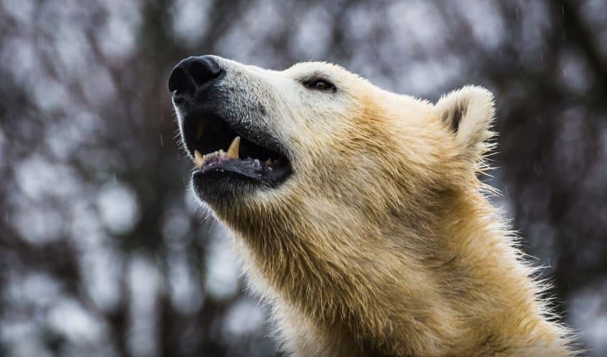 зубы млекопитающих, какие зубы у млекопитающих