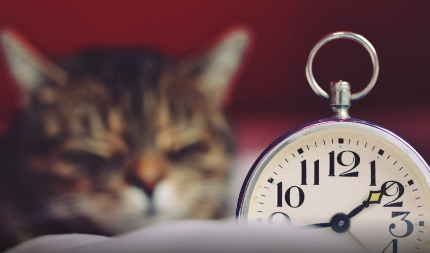 кто изобрел будильник, будильник, леви хатчинс