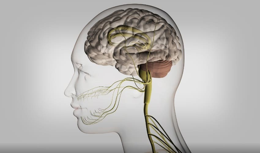 из каких частей состоит головной мозг, головной мозг человека, головной мозг человека состоит из, полушария головного мозга, ствол головного мозга