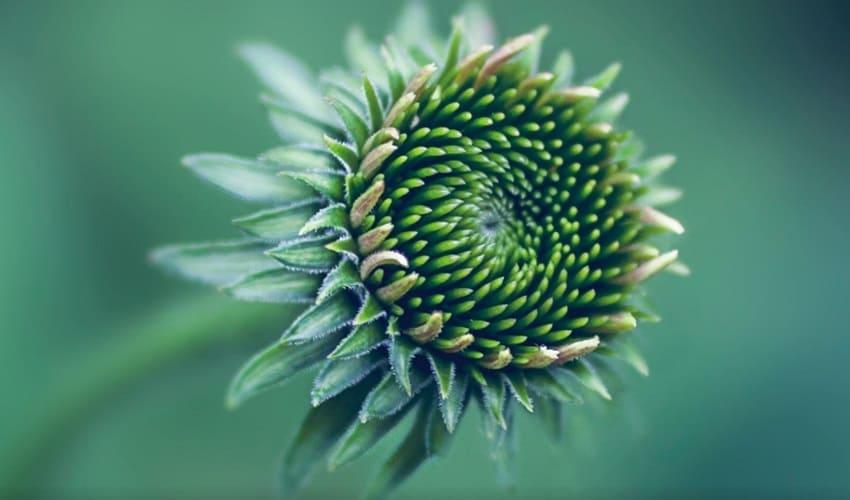 что заставляет цветы расцветать в определенное время года, цветение растений, механизм цветения растений
