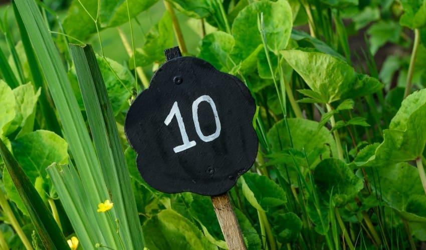 почему число 10 имеет такое значение, число 10, 10, значение числа 10
