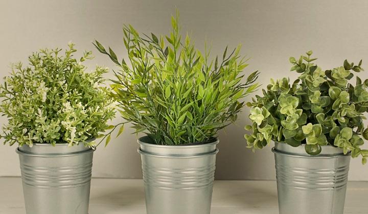 могут ли комнатные растения очищать воздух в доме, комнатные растения, могут ли комнатные растения очищать воздух