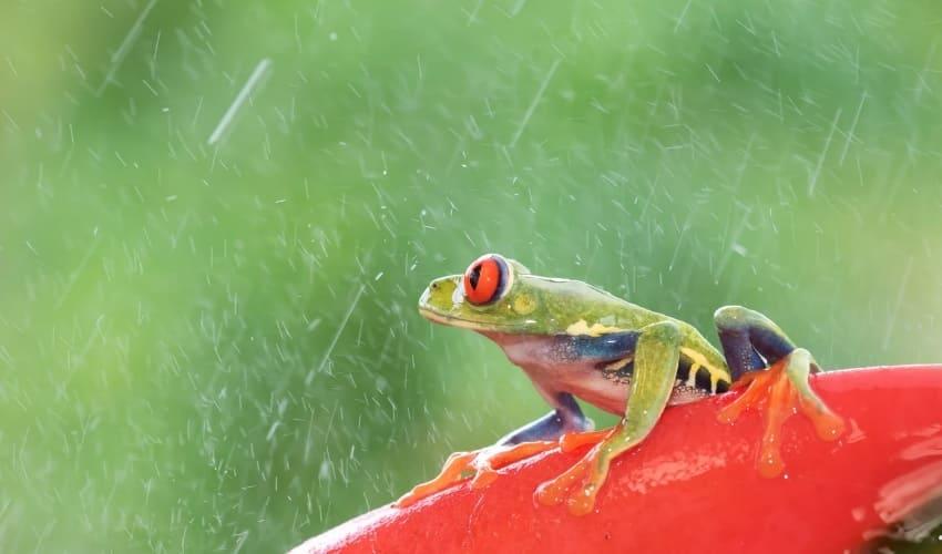 Может ли быть дождь из животных?