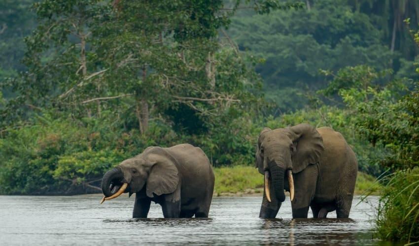 Дождевой тропический лес Конго