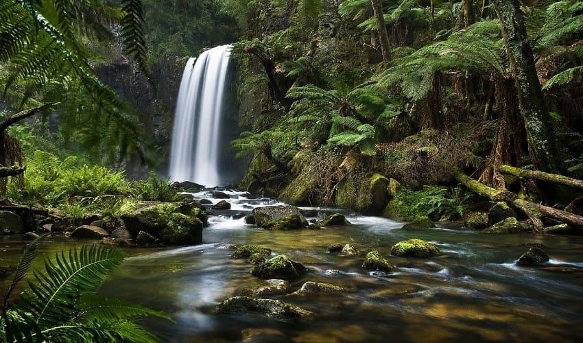 Дождевые леса восточного побережья Австралии